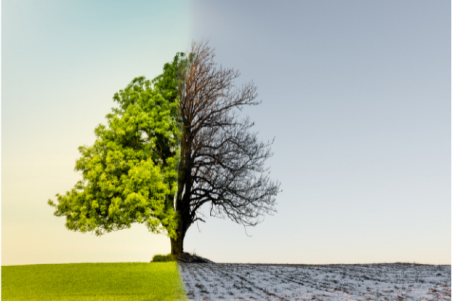 A tree that is both living and dying | NICRC